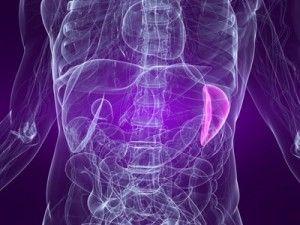 Spleen Surgery Boulder